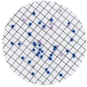 Хромогенная среда CCA