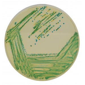 Хромогенная среда Cronobacter