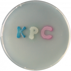 Хромогенная среда KPC