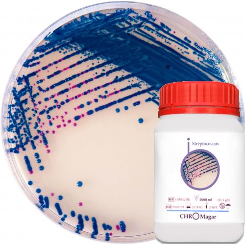 Хромогенная среда CHROMagar Streptococcus